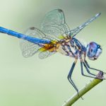 dragonfly-lead.jpg.653x0_q80_crop-smart