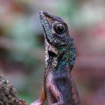 reptiles-12